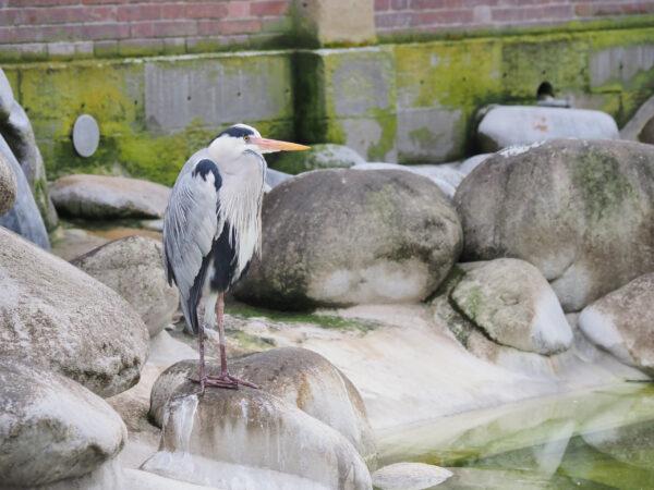 Штутгарт зоопарк Вильгельма (разные звери).