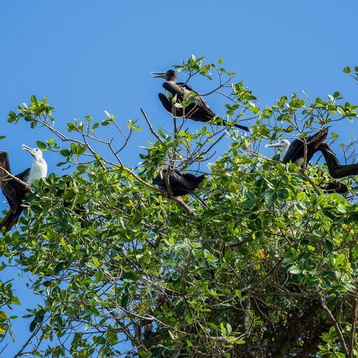 Доминикана. Птичий остров