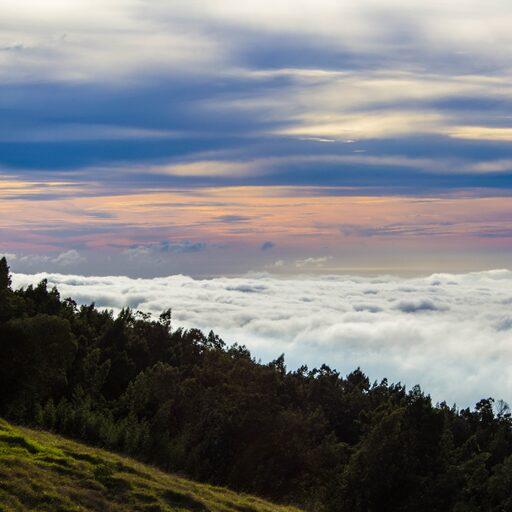 Лонгборд и Мауи.
