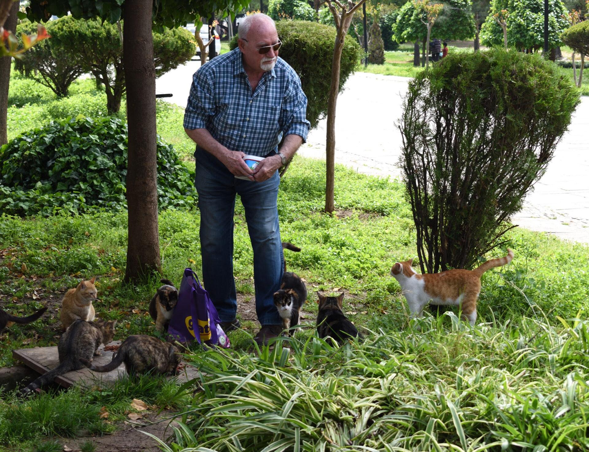 Коты разных стран инетолько.