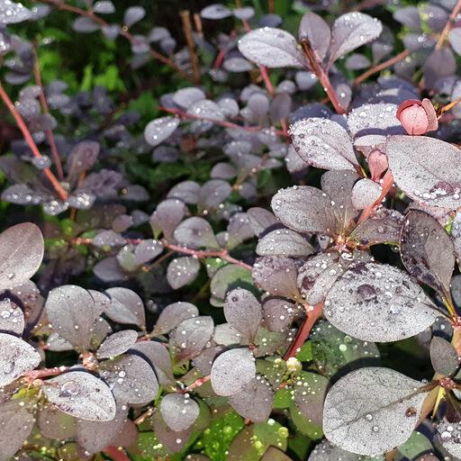 Немного садовых цветов вам в ленту!) До и после дождя…