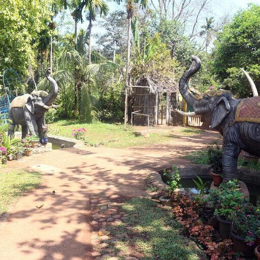 Плантация специй и слоны в Гоа